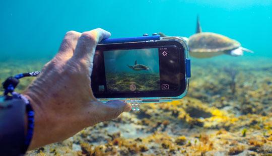 Best Underwater Camera for Murky Water