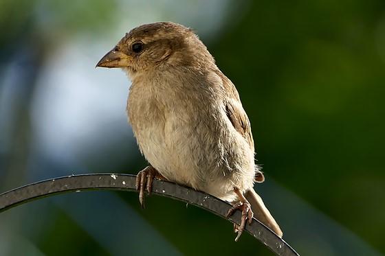 A selective focus shot of a small bird